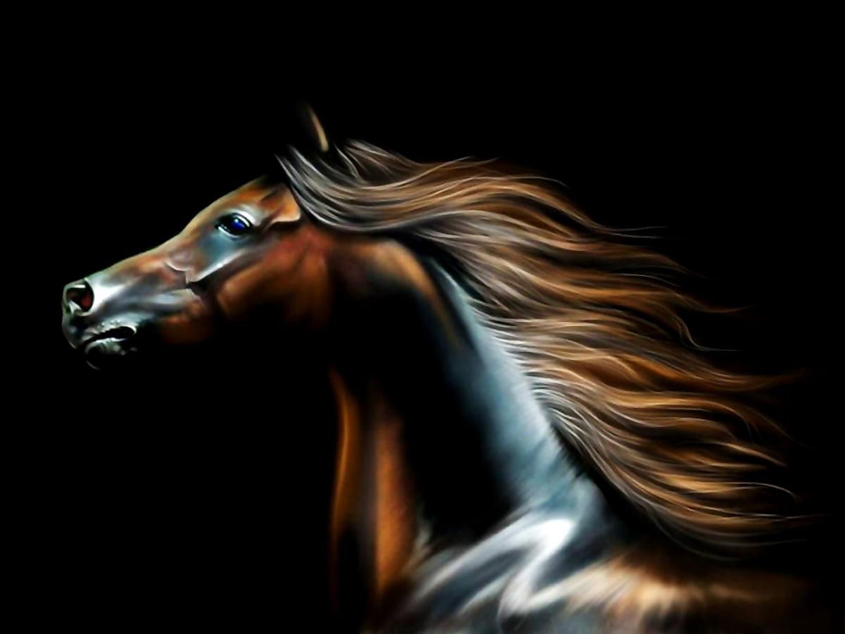 Cool Wallpaper Horse Mane Stallion Free Download Backgrounds