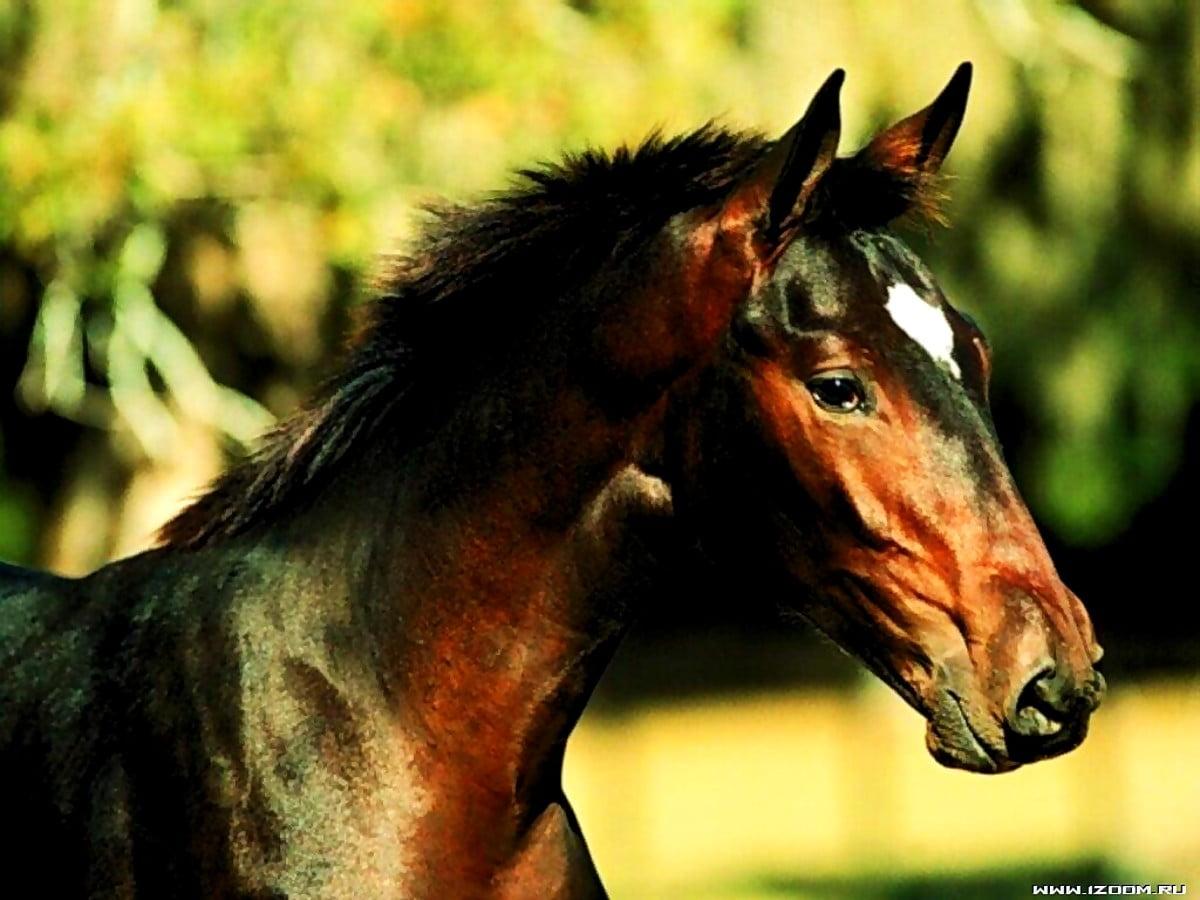 Horse Mane Animals Background Best Free Photos