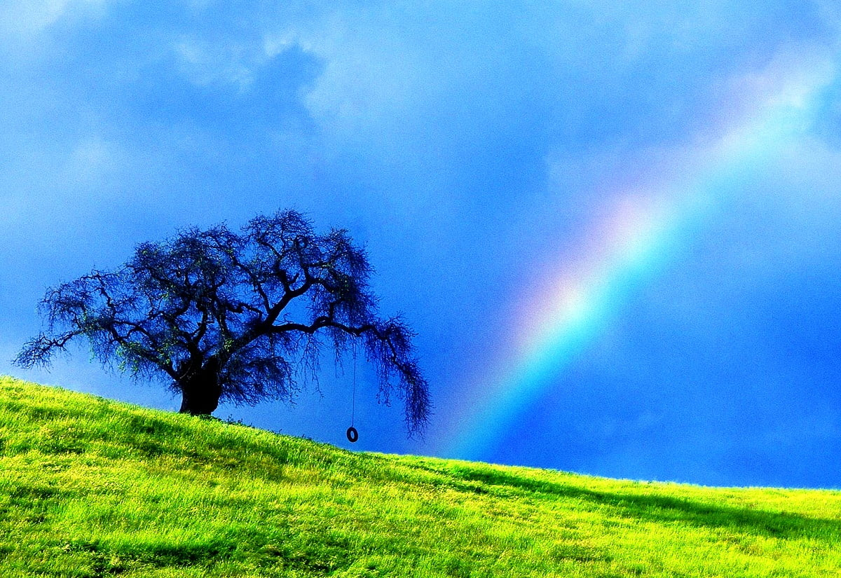 Laptop Rainbow, Green, Nature background picture   FREE Download images